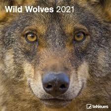 CALENDARIO 2021 WILD WOLVES – NEW 30X30